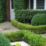 Earlsfield formal front garden ideas established box