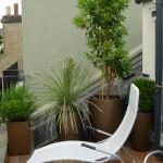 roof patio garden of this Balham