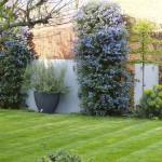 Wandsworth Common architectural contemporary garden