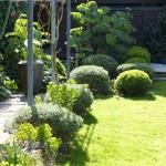 Wandsworth Common contemporary garden