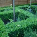 Clapham formal parterre front garden ideas