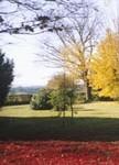 Surrey landscaped garden specimen trees