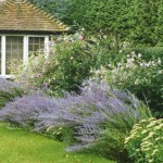 Surrey landscaped garden Jekyll inspired