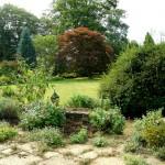 Surrey landscaped garden specimen tree autumn colour