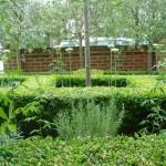 Clapham front garden parterre eyecatching